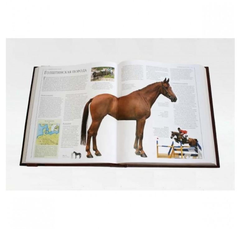 «Лошади. Новая энциклопедия» 451 (гр)