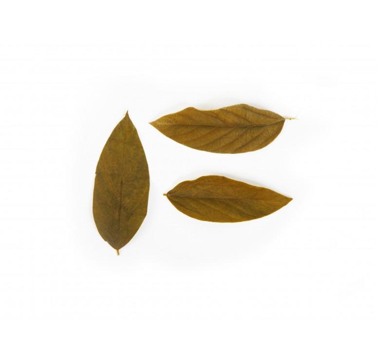 Листья вельвета