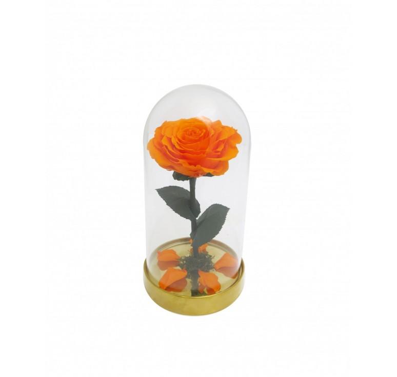 """Роза в колбе """"Красавица и чудовище""""оранжевая"""